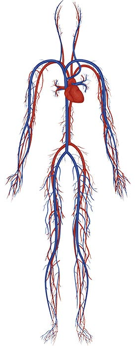 ESMo Technology - Circulatory System